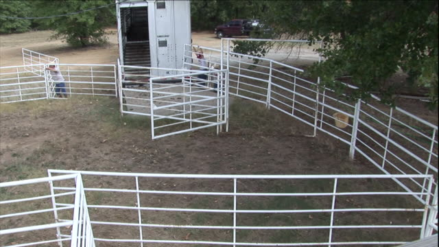 a horse trailer is backed up to corral fencing. - corral stock videos & royalty-free footage