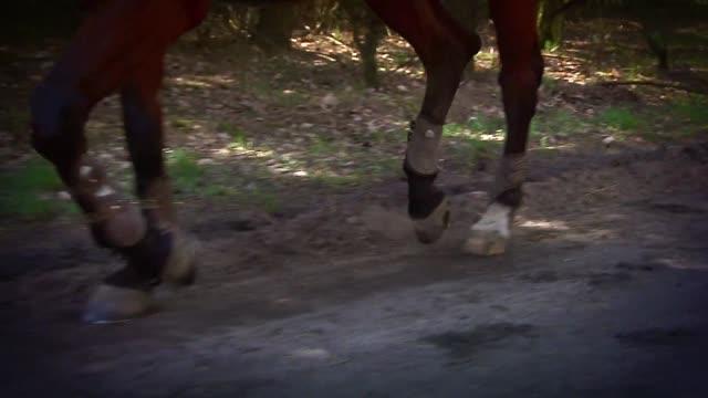 horse trotting - ferro di cavallo accessorio per animali video stock e b–roll