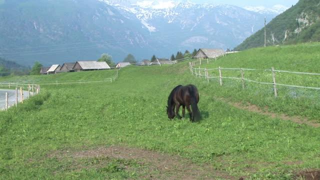 hd :馬 - 雄馬点の映像素材/bロール