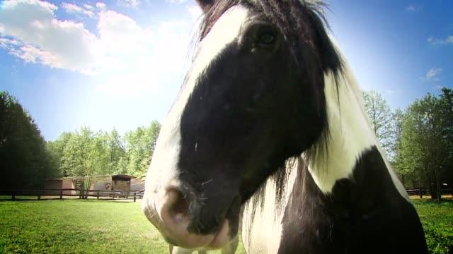 stockvideo's en b-roll-footage met horse - vachtpatroon