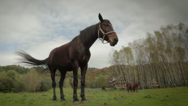 horse - カバノキ点の映像素材/bロール