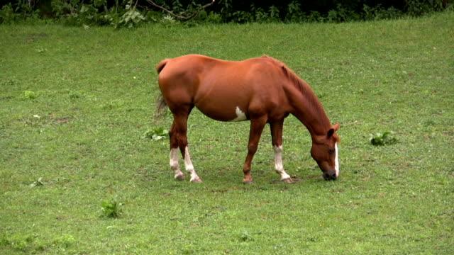 hd: horse - pälsteckning bildbanksvideor och videomaterial från bakom kulisserna