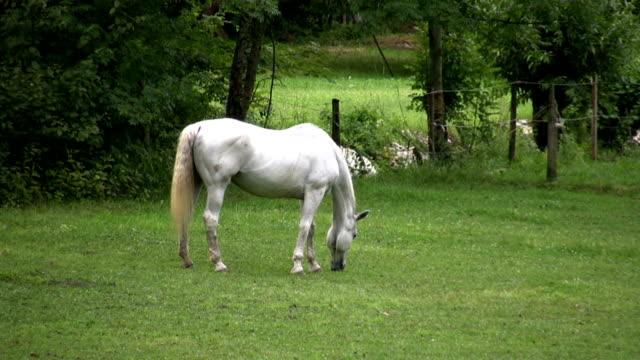 hd :馬 - 捕らえられた動物点の映像素材/bロール