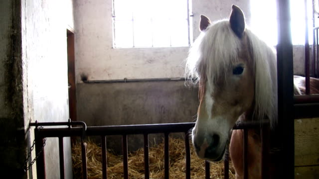 hd: horse - steel stock-videos und b-roll-filmmaterial