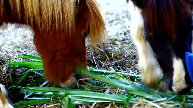 horse - esel stock-videos und b-roll-filmmaterial