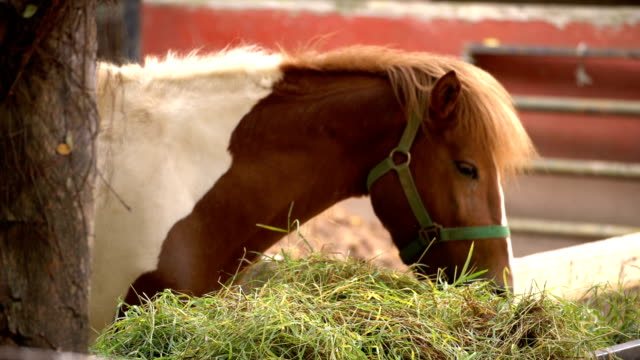 horse - sideways glance stock videos & royalty-free footage