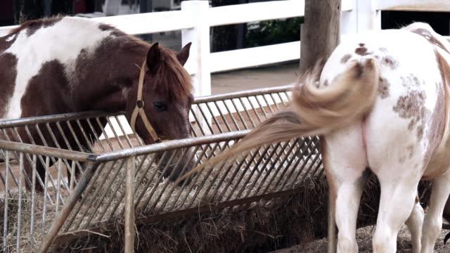 horse - feeding stock videos & royalty-free footage