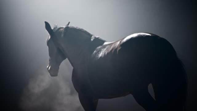 霧の夜を歩くslo mo馬 - 競走馬点の映像素材/bロール