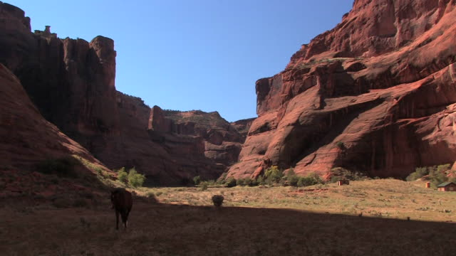 ws horse walking on grass at bottom of canyon/ canyon de chelly national monument, arizona - canyon de chelly stock videos & royalty-free footage