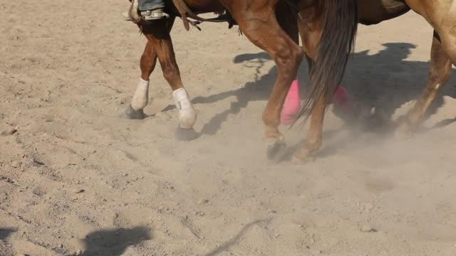 Paard Walking slowmotion in een Rodeo