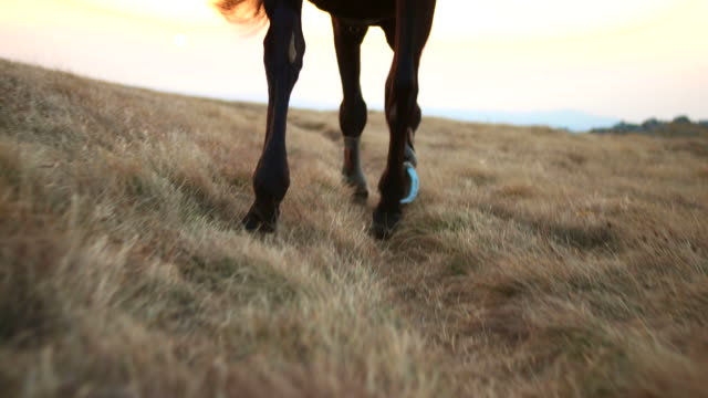 hd: horse walking through meadow - recreational horseback riding stock videos and b-roll footage