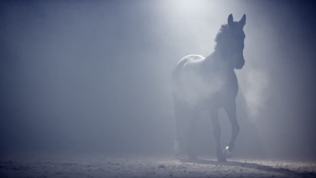 SLO MO Horse walking through mist at night