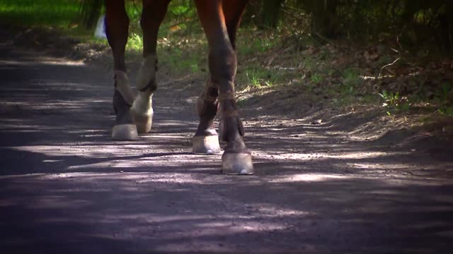 horse walking - all horse riding stock videos & royalty-free footage