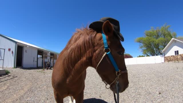 horse with a cowboy hat - pferdestall stock-videos und b-roll-filmmaterial