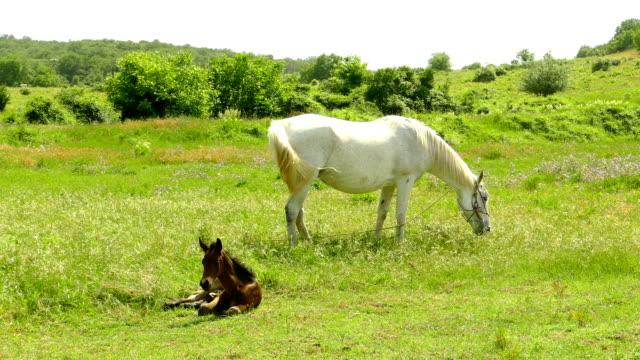 緑の牧草地の馬と馬 - 子馬点の映像素材/bロール
