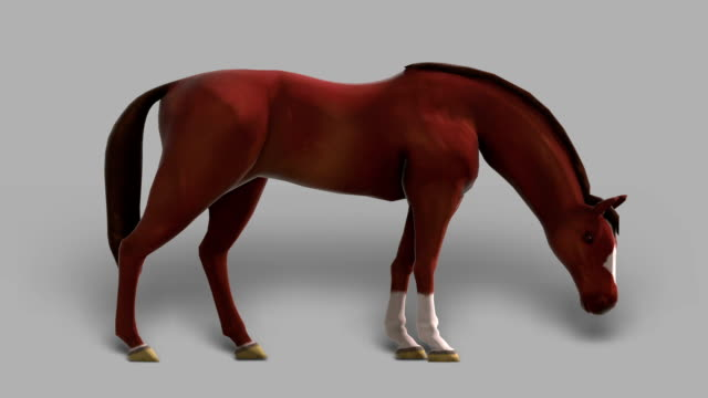 Horse with Alpha Channel (Loopable)