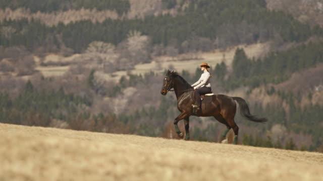 hd: horseback pacing along countryside - recreational horseback riding stock videos and b-roll footage