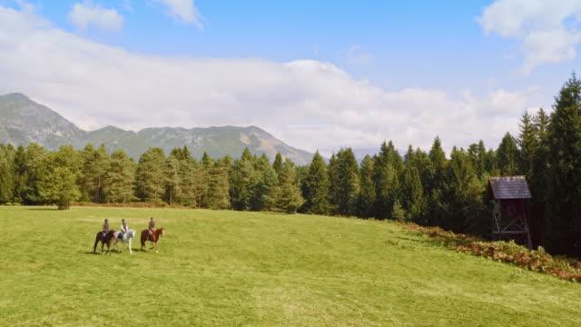 stockvideo's en b-roll-footage met luchtige paardrijtocht over een bergweide - kleine groep dieren