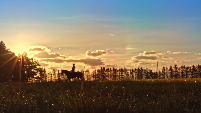 slo mo ts horseback riding across golden meadow at sunset - animale da lavoro video stock e b–roll