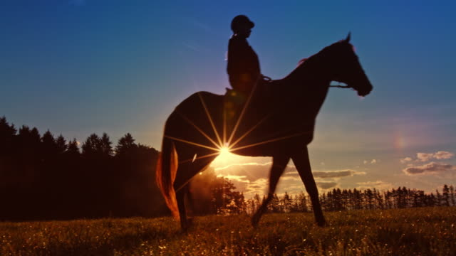 ds horseback riding across meadow in setting sun - recreational horseback riding stock videos & royalty-free footage