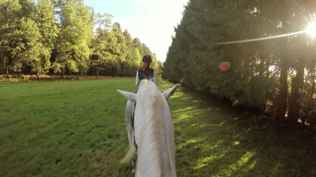 pov horseback riding behind a woman on white horse - all horse riding stock videos and b-roll footage