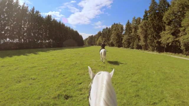 vídeos de stock e filmes b-roll de perspetiva pessoal cavalgar em cavalos em execução no prado - cavalgar