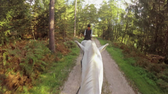 pov horseback riding on white running horses - recreational horseback riding stock videos & royalty-free footage
