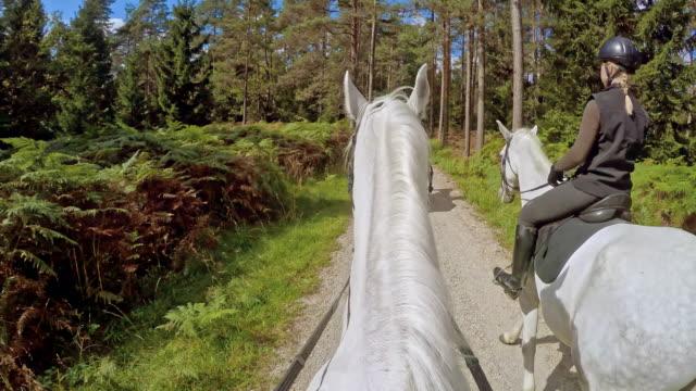 POV paardrijden door prachtig bos
