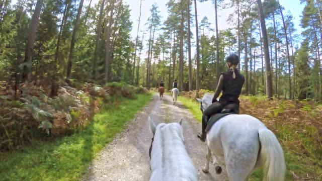 POV paardrijden door het bos van de ochtend