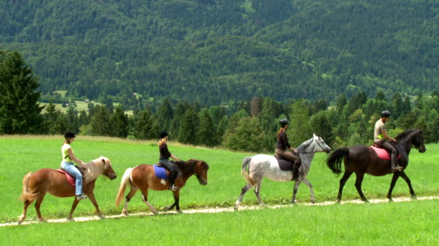 hd: horseback riding trail - recreational horse riding stock videos & royalty-free footage