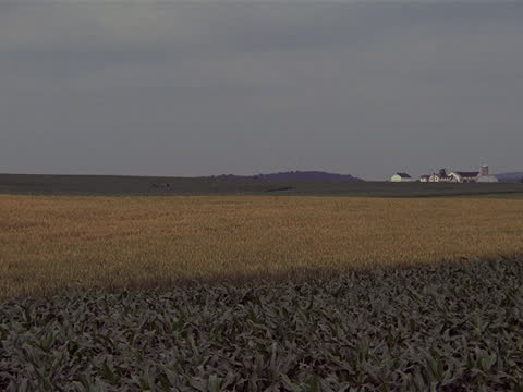 stockvideo's en b-roll-footage met a horse-drawn carriage drives past farm fields in amish country. - amish