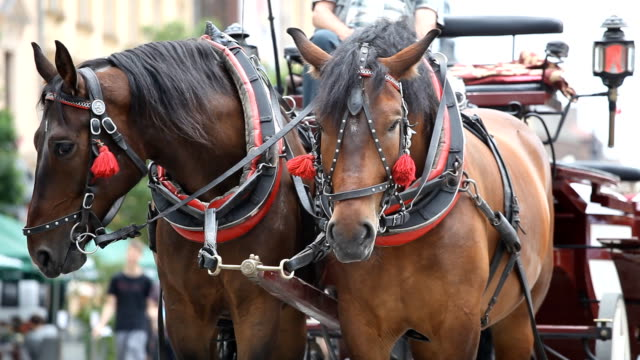 horsedrawn carriage in krakow - horsedrawn stock videos & royalty-free footage