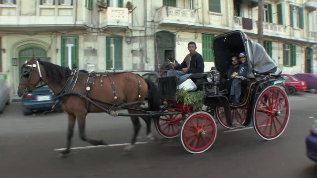 WS POV ZI Horse-drawn carriages racing against each other in midst of car traffic, Alexandria, Egypt