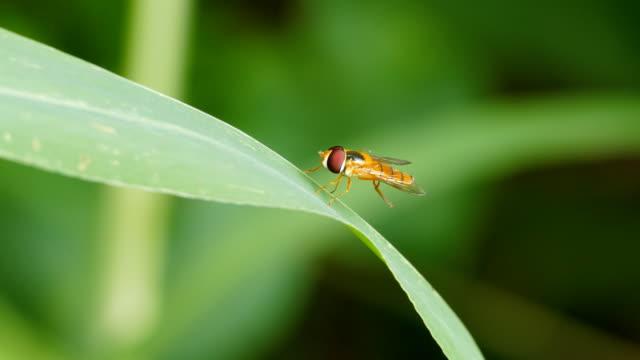 horseflies on green leaf. - tentacle stock videos & royalty-free footage