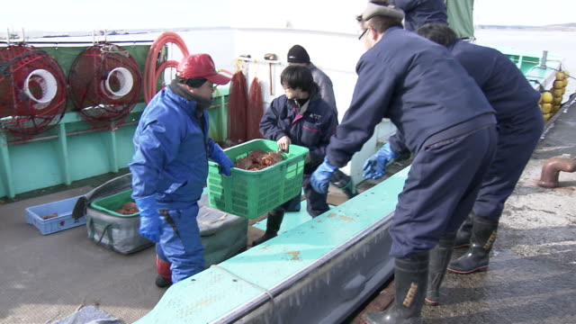 horsehair crabs and fishermen, akkeshi port - hokkaido stock videos & royalty-free footage