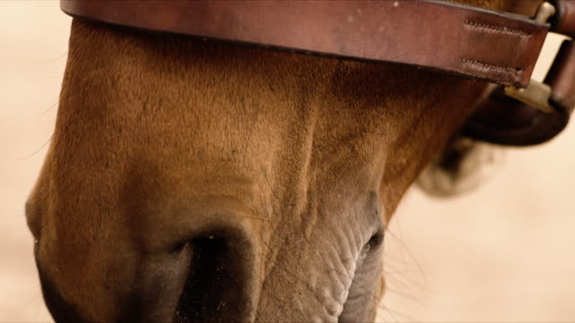 horse-head close-up tilt-up - steve munro stock videos & royalty-free footage