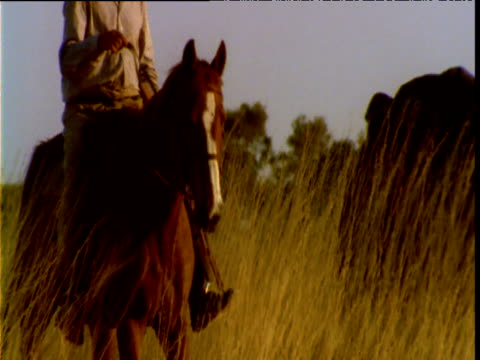 horseman rides through tall spinifex grass in outback, australia - hat stock videos and b-roll footage