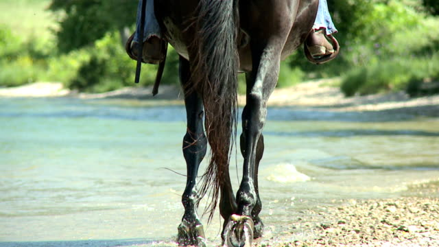 hd slow-motion: horseriding along the coast - recreational horse riding stock videos and b-roll footage