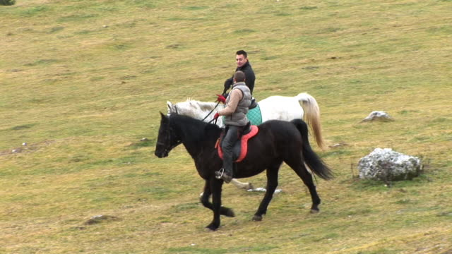 hd: horseriding in nature - recreational horseback riding stock videos & royalty-free footage