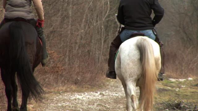 hd :自然の乗馬 - 雄馬点の映像素材/bロール