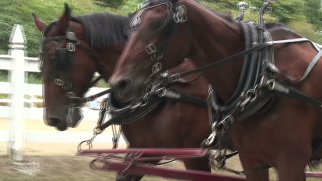 horses 2 - hd 1080/60i - horsedrawn stock videos & royalty-free footage