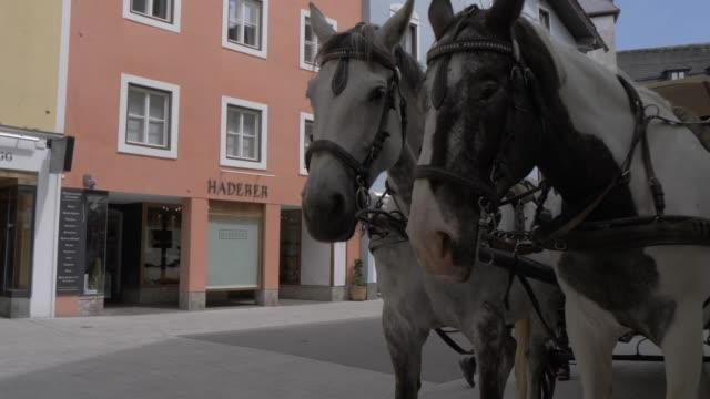 stockvideo's en b-roll-footage met horses and colourful buildings in vorderstadt, kitzbuhel, tyrol, austrian alps, austria, europe - werkdier