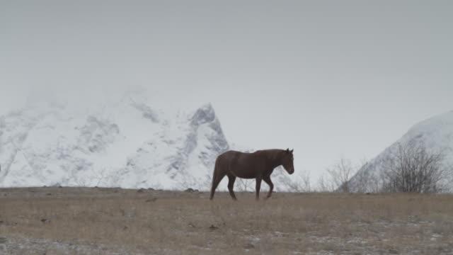 horses and mountain - pälsteckning bildbanksvideor och videomaterial från bakom kulisserna