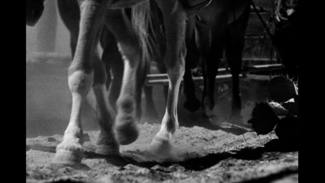 vidéos et rushes de horses and oxen legs walking and wagon wheels rolling seen from low angle wagon train on january 01 1940 in arizona - animaux au travail