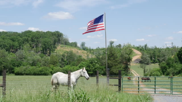 stockvideo's en b-roll-footage met horses and ranch in usa - ranch