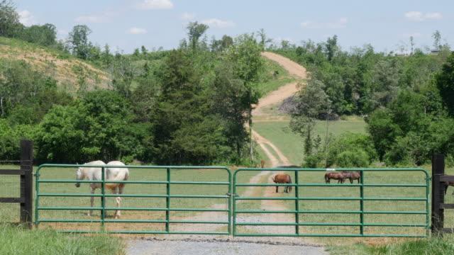 vídeos de stock, filmes e b-roll de horses and ranch in usa - rancho