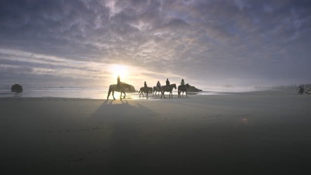 horses and riders on pacific beach at sunset - all horse riding stock videos & royalty-free footage