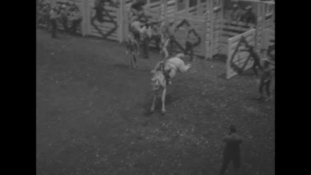 horses and riders with flags held aloft walk in opposite directions / vs bucking broncos and riders burst out of chutes / brahma bulls and riders /... - bocksprång bildbanksvideor och videomaterial från bakom kulisserna