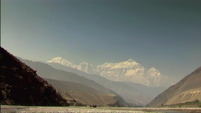 vídeos de stock e filmes b-roll de ws horses and snowcapped mountains in kali gandaki river bed / kagbeni, mustang, nepal - grupo médio de animais