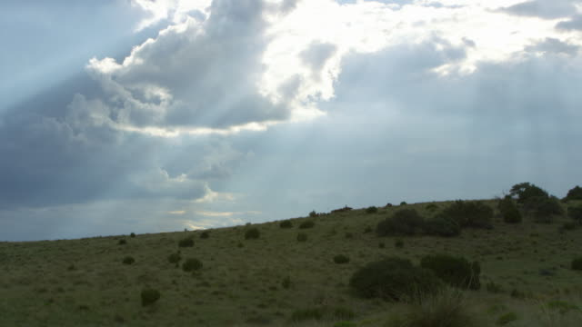 horses and wild horses on top of hill below cloudy sky - 数匹の動物点の映像素材/bロール